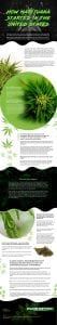 How-Marijuana-Started-in-the-United-States Infographic
