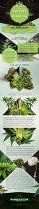 The-History-of-Marijuana Infographic