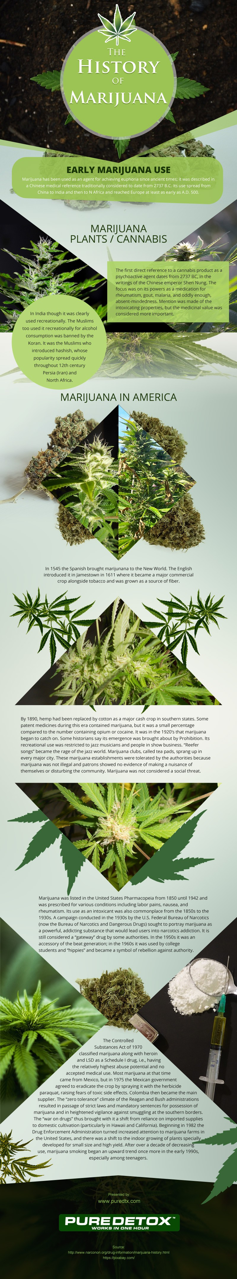 The-History-of-Marijuana Infographic