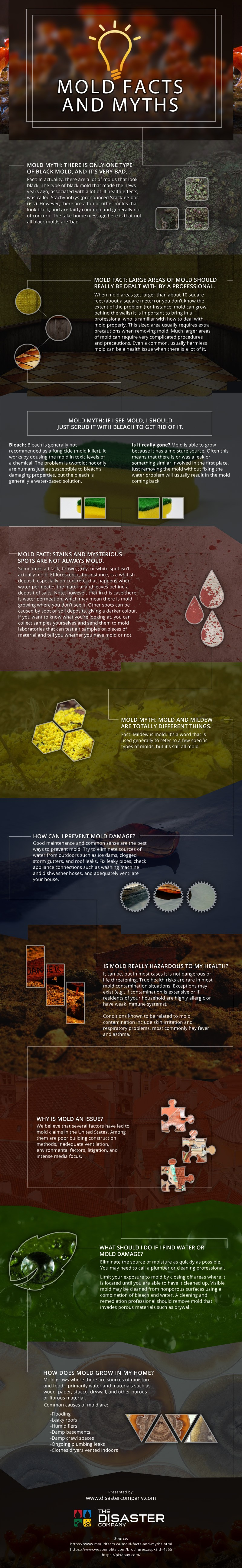 Mold-Facts-and-Myths Infographic