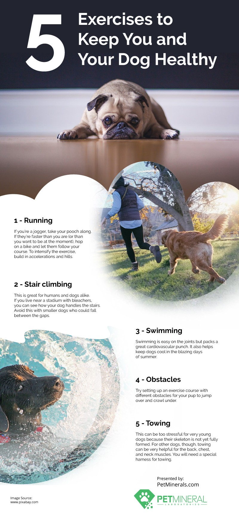 5 Exercises to Keep You and Your Dog Healthy
