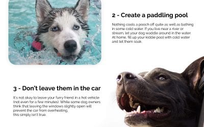 6 Ways to Keep Your Dogs Cool in Summer
