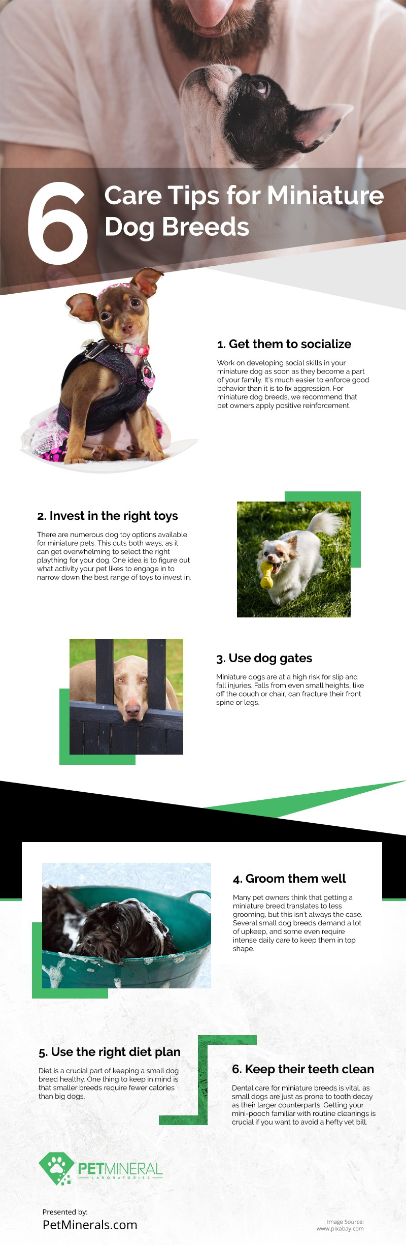 6 Care Tips for Miniature Dog Breeds Infographic